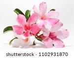 close up   the beautiful fresh... | Shutterstock . vector #1102931870