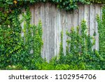 green ivy leaves climbing on... | Shutterstock . vector #1102954706