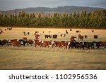 view of beef cattle in pasture... | Shutterstock . vector #1102956536