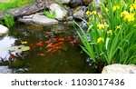 Small japanese koi in pond near ...