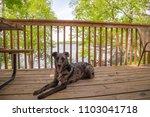 dog sitting on porch balcony... | Shutterstock . vector #1103041718