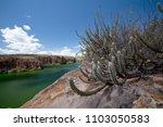 caatinga vegetation on the... | Shutterstock . vector #1103050583