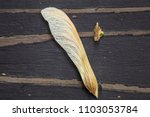 maple helicopter seed on wood... | Shutterstock . vector #1103053784