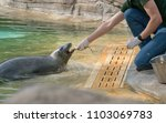 The Zookeeper Is Feeding The...