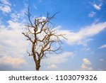 Dry Tree With Cloudy Sky