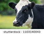 a close up of a black and white ... | Shutterstock . vector #1103140043