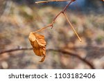 last year leaf on the branch | Shutterstock . vector #1103182406
