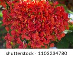beautiful tropical red flowers. ... | Shutterstock . vector #1103234780