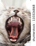 Stock photo yawning grey beautifull home cat 110326868