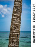 Foreground Of A Palm Trunk....