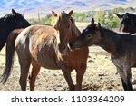 wild american mustang horse... | Shutterstock . vector #1103364209