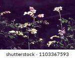tree on  black background       ...   Shutterstock . vector #1103367593