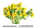 summer june  forest... | Shutterstock . vector #1103385590
