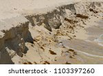 sandy beach of a tropical sea. | Shutterstock . vector #1103397260