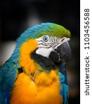 Small photo of Bright yellow parrot ara in the forest