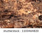 birch bark reverse side | Shutterstock . vector #1103464820