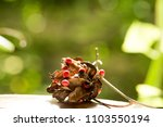 american pea  buddhist rosary... | Shutterstock . vector #1103550194