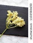 elderberry plant... | Shutterstock . vector #1103583650