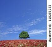 Red Poppy Field And Lone Tree