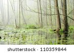 swamp in fog at the sunrise | Shutterstock . vector #110359844