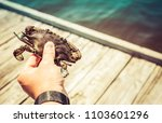 vacation blue crab catching  | Shutterstock . vector #1103601296