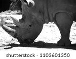 the white rhinoceros or square...   Shutterstock . vector #1103601350