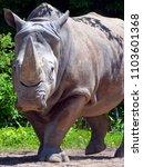 the white rhinoceros or square...   Shutterstock . vector #1103601368
