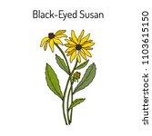Black Eyed Susan  Rudbeckia...