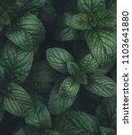 green mint leaves pattern... | Shutterstock . vector #1103641880