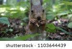 wildlife in russia | Shutterstock . vector #1103644439