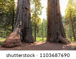 giant sequoia trees at... | Shutterstock . vector #1103687690