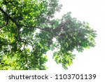 green leaf isolated on a white... | Shutterstock . vector #1103701139