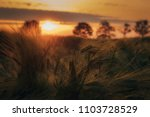 detail of grain field at... | Shutterstock . vector #1103728529