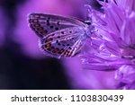 chalkhill blue butterfly ...   Shutterstock . vector #1103830439