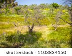 view of sicilian uncultivated... | Shutterstock . vector #1103834150