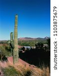 saguaro cactus cereus giganteus ... | Shutterstock . vector #1103875679