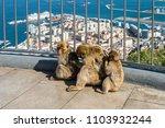 gibraltar  uk   may 18  2017 ...   Shutterstock . vector #1103932244
