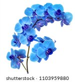 Beautiful Blue Orchid Without...