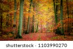 golden and brown in the forest... | Shutterstock . vector #1103990270