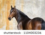 Bay Horse Look Back Isolated O...
