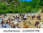 a herd of sheep with the... | Shutterstock . vector #1104059798