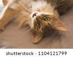 somali appealing something | Shutterstock . vector #1104121799