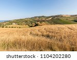 panoramic view of olive groves... | Shutterstock . vector #1104202280