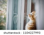 Stock photo the kitten is hidden the red kitten is frightened the blue eyed kitten the kitten s eyes the 1104227993