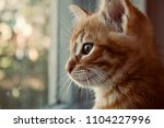 Stock photo the kitten is hidden the red kitten is frightened the blue eyed kitten the kitten s eyes the 1104227996
