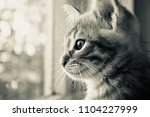 Stock photo the kitten is hidden the red kitten is frightened the blue eyed kitten the kitten s eyes the 1104227999