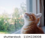 the kitten is hidden  the red... | Shutterstock . vector #1104228008