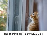 the kitten is hidden  the red... | Shutterstock . vector #1104228014