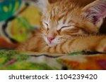 Stock photo ginger hiding kitten peeking frightened ginger kitten frightened kitten on the couch kitten behind 1104239420