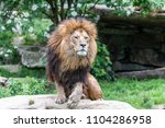 big male african lion with...   Shutterstock . vector #1104286958